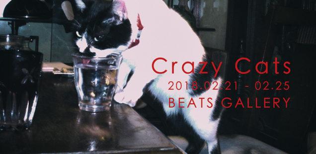 「Crazy Cats」2月21日(水)〜2月25日(日)