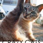 「CRAZY CATS」8月8日(水)〜8月12日(日)