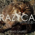 「CRAZY CATS」2月20日(水)〜2月24日(日)