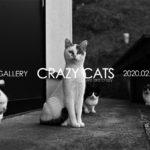 「CRAZY CATS」2月19日(水)〜2月23日(日)